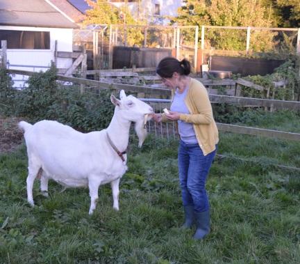 sharing-banana-with-goat