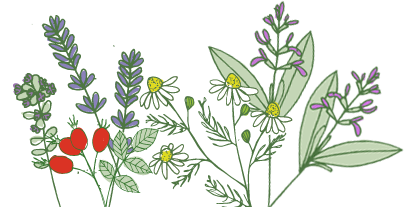 A selection of herbs and botanicals used by Laughing Bird in their body care products