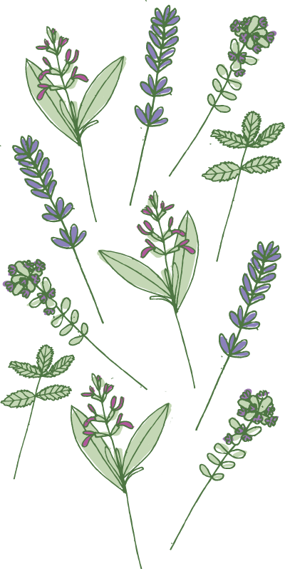A selection of herbs used in Laughing Bird's body care