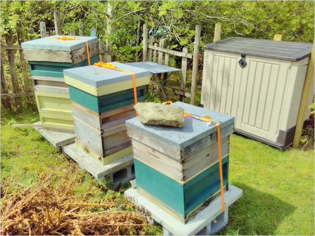 Apiaries supplying honey to Laughing Bird